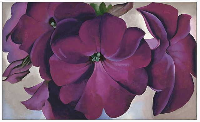 petunia-georgia-okeefe-from-emma-craibs-blog